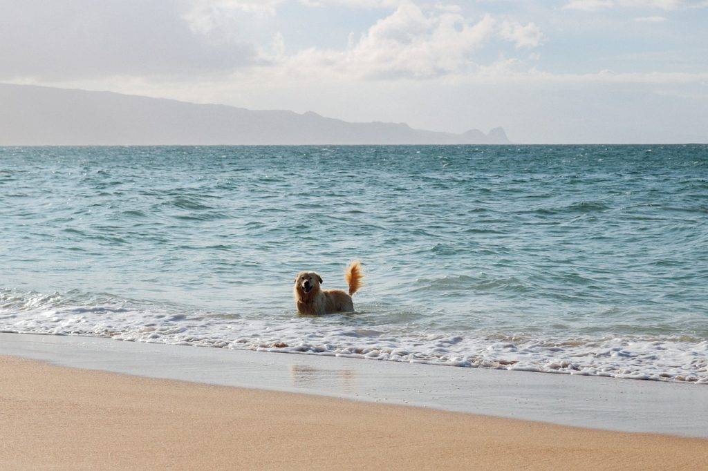 Moving Your Dog to Hawaii
